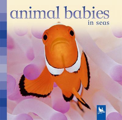 Animal Babies in Seas By Nicholson, Sue